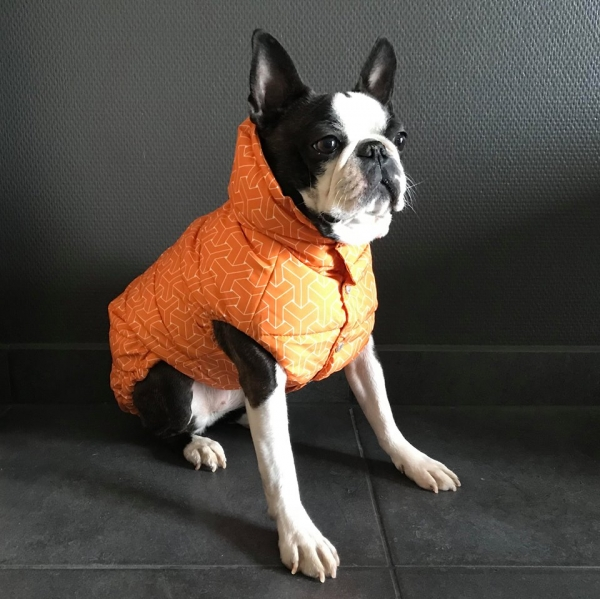 Puppy Angel, dicke Jacke, Wasser-u. winddicht,  orange oder schwarz, Gr XXXL